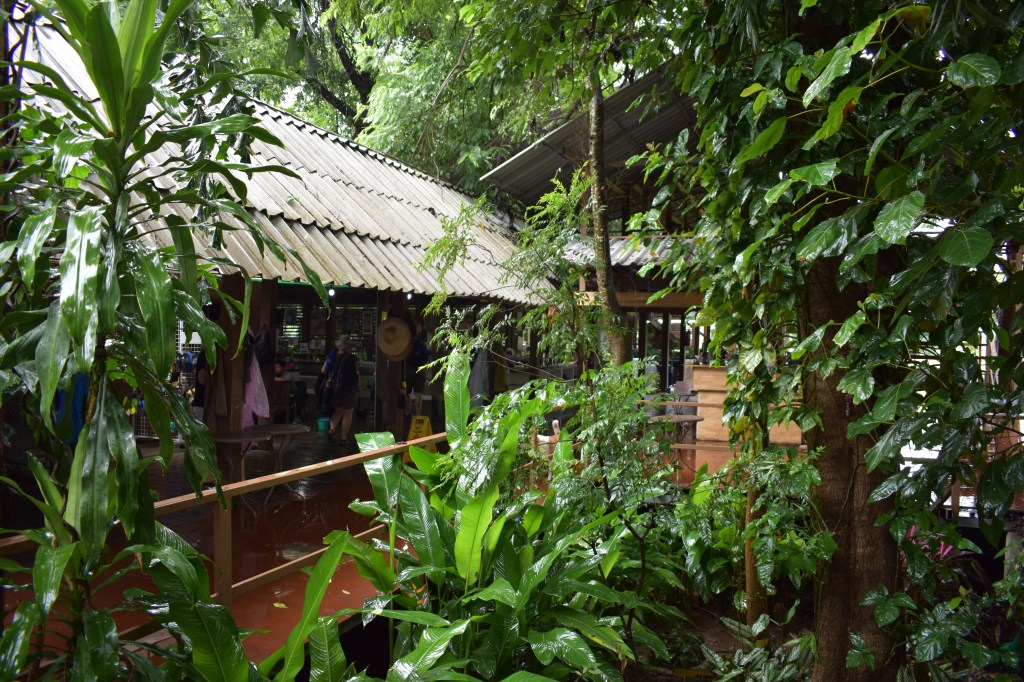 vivid greenry surrounding hut in elephant nature park during rainy season jungle living vegan