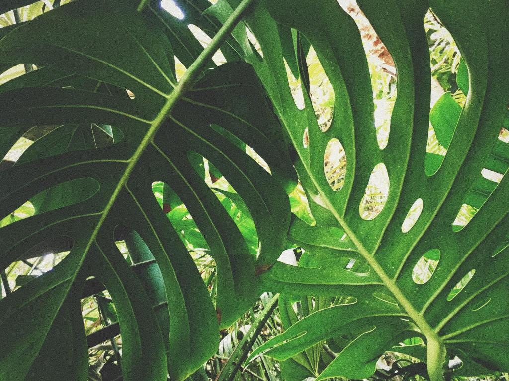 Sustainable travel tips green travel guide palm leaves botanic gardens
